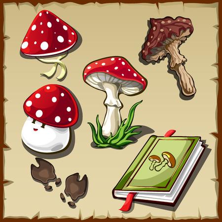 stipe: Vector set of poisonous mushrooms and cookbook Illustration