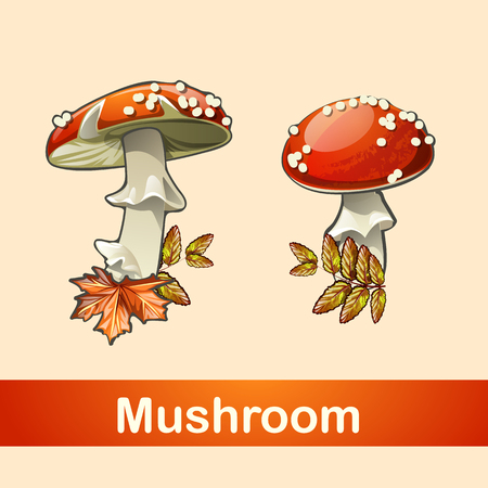fleshy: Two fly agaric closeup with a different side and different types of leaves Illustration