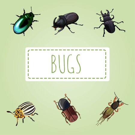 etymology: Set of various beetles, six vector image Illustration