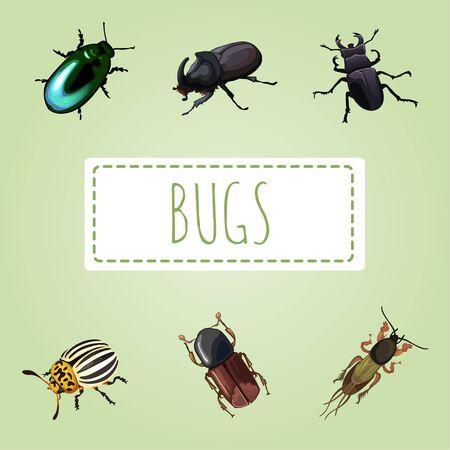 etymology: Set of various beetles, six vector image Illustration