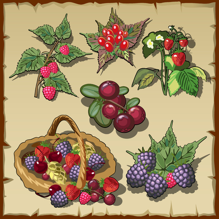 confiture: Big vector collection of red ripe delicious berries Illustration
