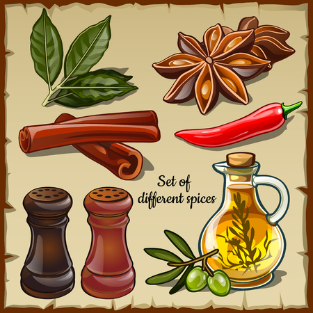 foodie: Vector big set of different spices of the chef and foodie