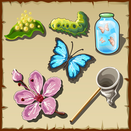 entomologist: Life stages of a butterfly in drawn, vector set of entomologist