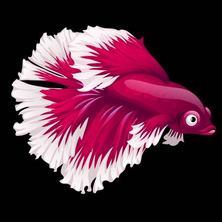 gills: Red and white fish cockerel closeup on a black background, cartoon