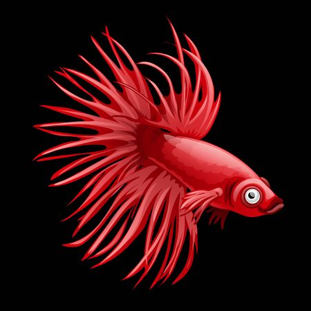 intimidation: Single red fish rooster closeup, cartoon vector on a black backfround Illustration