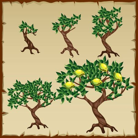 Growth stages of lemon tree in the development process, five icons Illustration