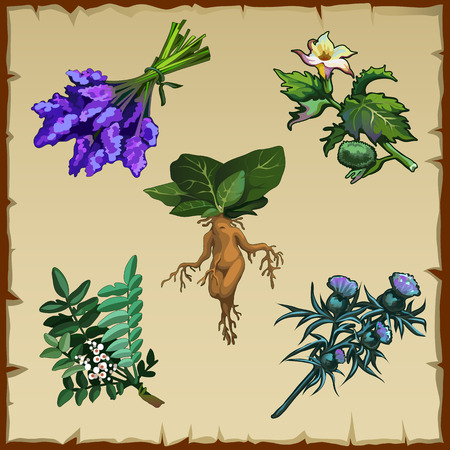 Set of different exotic flowers and Mandrake, five items