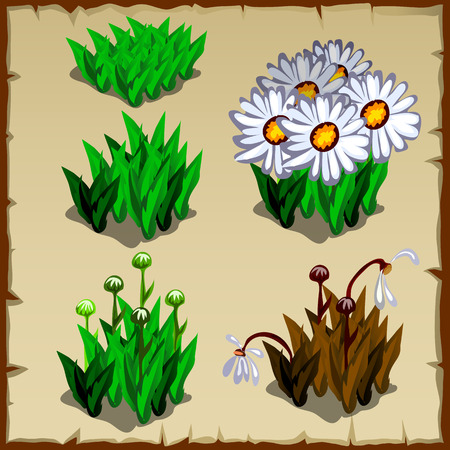 Stages of growth daisies, from planting to withering, five icon