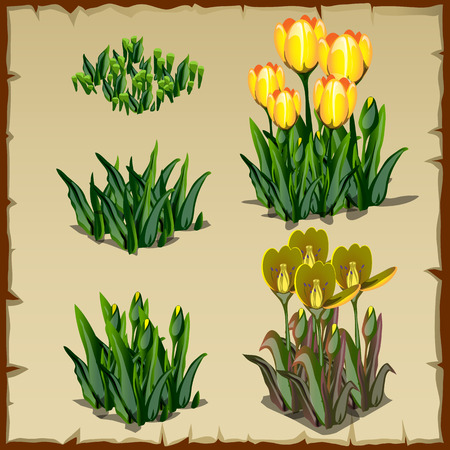 Stages of growth yellow tulips, from planting to withering, five icon Illustration
