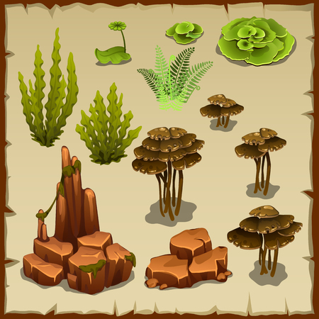 under water grass: Big set of variety of underwater plants and stones