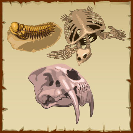 Set of fossil skeletons, three vector images of different animals
