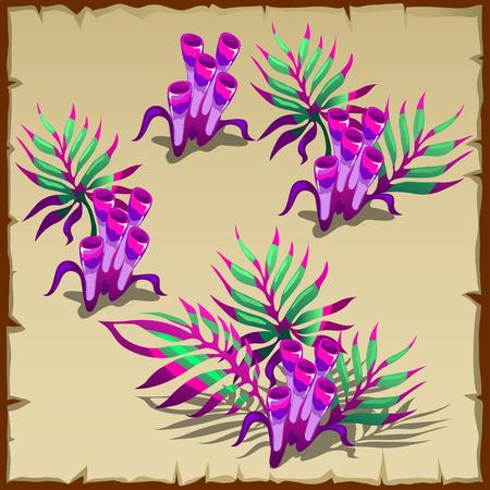 sea weed: Tubular purple and green marine seaweed, four vector image
