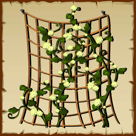 cling: Fine garden mesh for decoration and home design