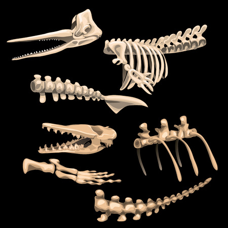 Bones and fragments of skeletons of ancient fish