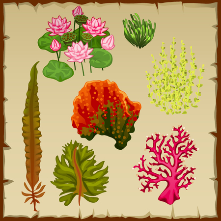 polyp: Vector set of algae and corals, the decoration of the seabed