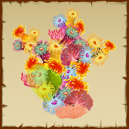 polyp: Colourful bush corals and polyps, single vector object Illustration