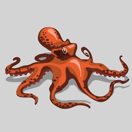 subtropics: Orange octopus closeup, isolated vector illustration