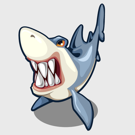 Evil shark with sharp teeth, isolated vector illustration