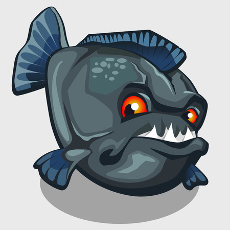 carnivorous fish: Evil piranha with sharp teeth, isolated vector illustration