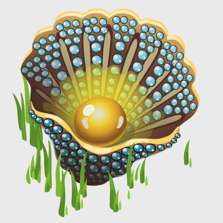 pearl shell: Open golden shell box with pearl and algae, image isolated vector illustration Illustration