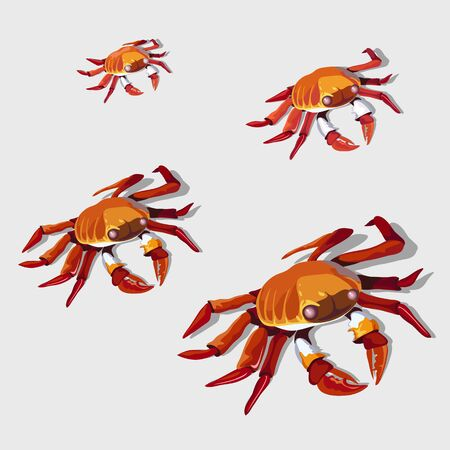 Four red crab isolated, vector illustration