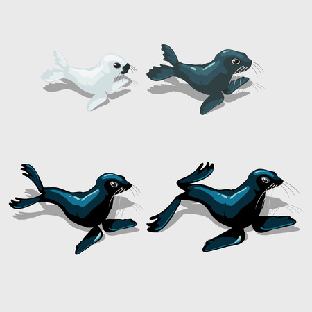 Set of four different sea lion, white, grey and blue