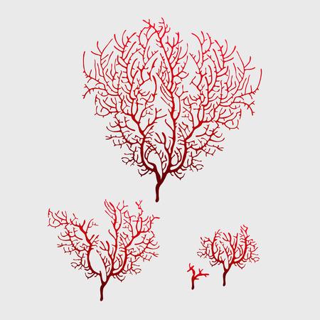 algas marinas: Ramas de coral rojo, icono o la decoración de sus ubicaciones, y otros objetos de diseño
