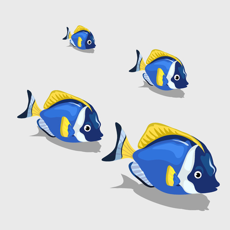 nemo: Blue tropical fish small and closeup isolated, set