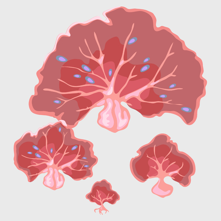 Fancy red coral underwater in the form of a fan, marine series Illustration