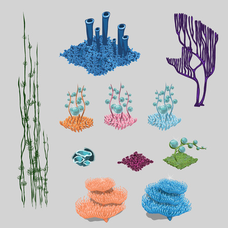 under water grass: Elements of reef, algae, corals and sea flowers