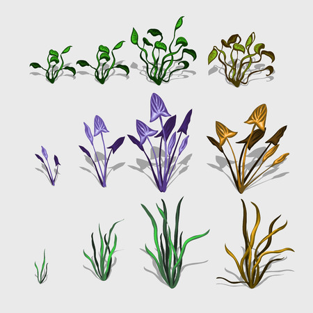 under water grass: Fancy different plants and grass, big set, isolated icon