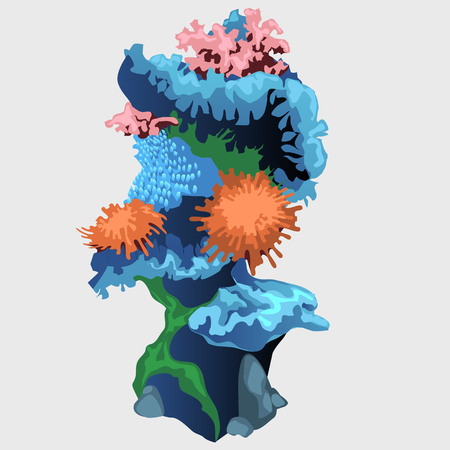 polyp: Rock underwater element reef with algae and coral