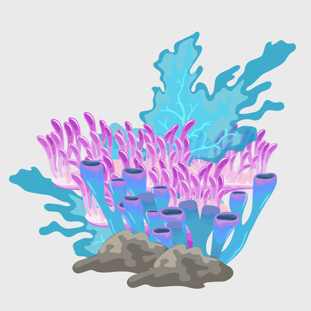 polyp: Beautiful bouquet of blue and pink coral, underwater set Illustration
