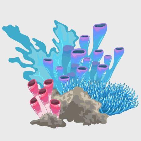polyp: Different types of blue and red coral, decoration location Illustration
