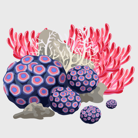 anthozoa: Sponge and tube coral, elements of reef, underwater plant set