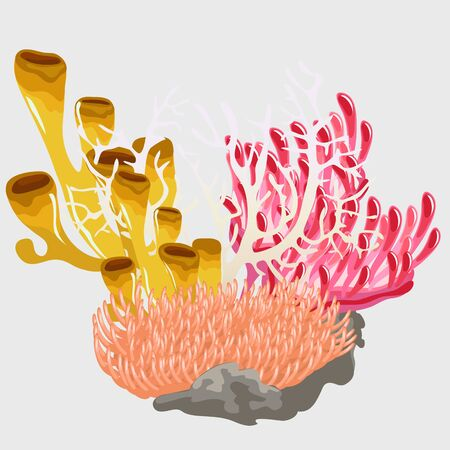 polyp: Bouquet of colorful corals, tropical scenery of underwater world
