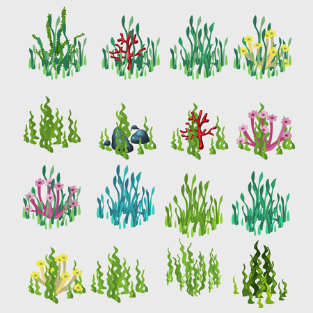 under water grass: Icons grass with colorful flowers and coral, vegetable vector series
