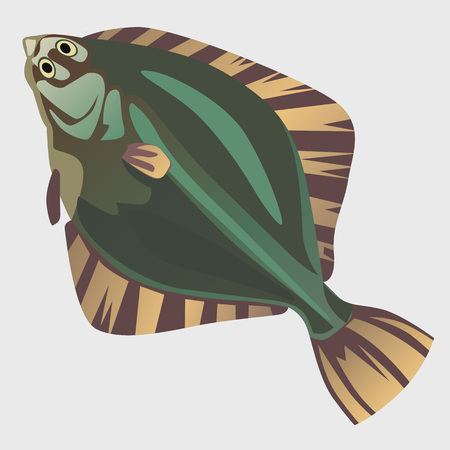 plaice: Image of flatfish in the flat style, marine series illustrations