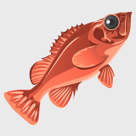 anchovy: Image of the fish isolated in flat style, marine series vector llustrations Illustration
