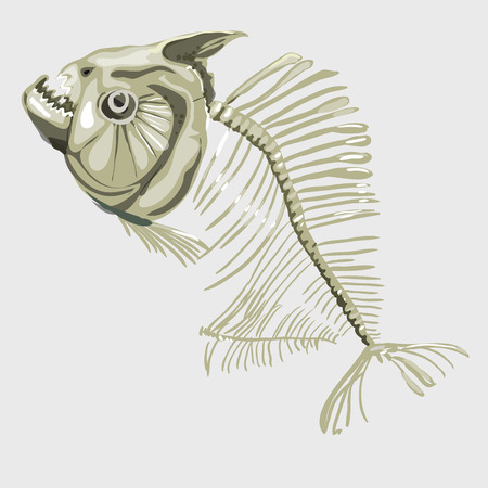 skeleton of fish: Fish skeleton closeup,  icon for menu, website design, and other design needs