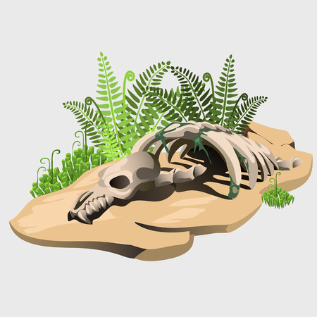 Fossil skeleton of an ancient animal on the stone with fern