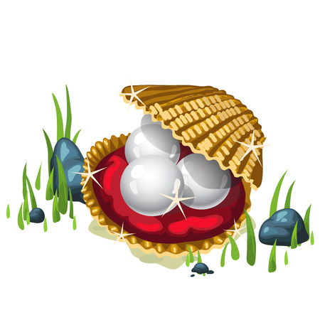 cockle: Three white pearls in a Golden casket and grass around