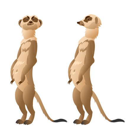 mongoose: Two funny meerkat closeup on a white background, cartoon animal