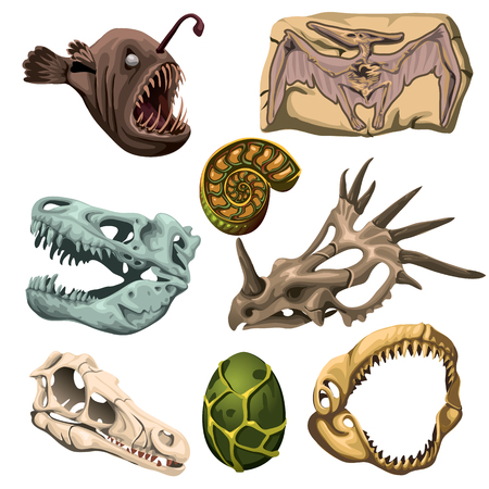 fossil: Ancient fossil animals, fish and egg, eight vector image Illustration