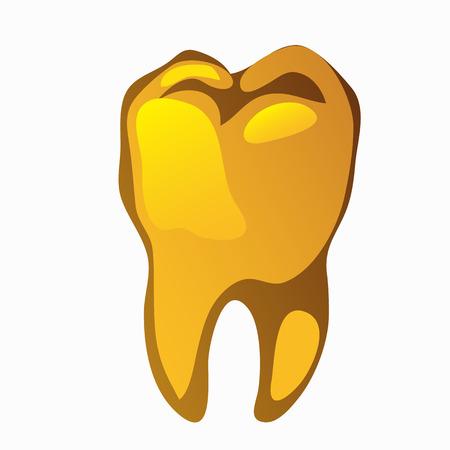 molar: Golden human molar closeup on a white background