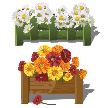 gerbera daisies: Chamomile and gerbera daisies are growing behind fenceVector illustration. Illustration