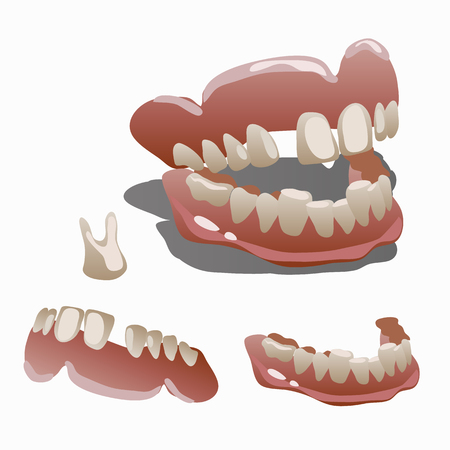 molar: Human jaw and tooth molar closeup. Medical vector set