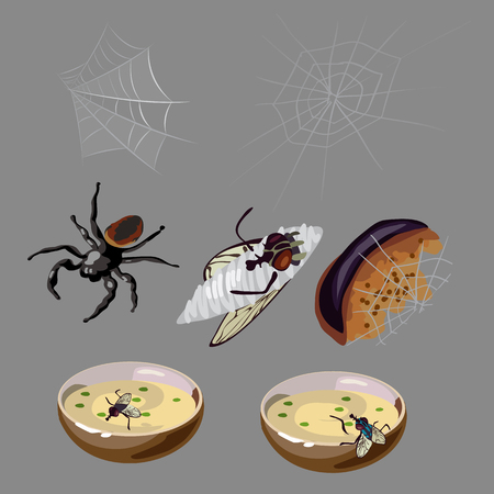 rotten: Flies, spiders, rotten food and hungry insects, vector set Illustration