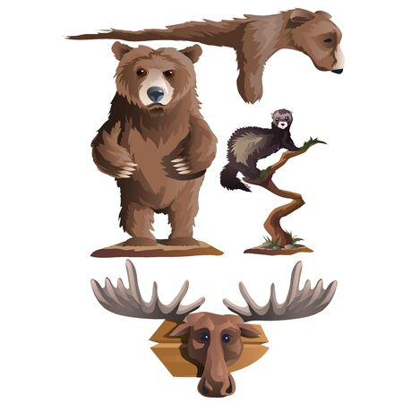 Hunting trophies, bear, deer and other animals, four wild beasts