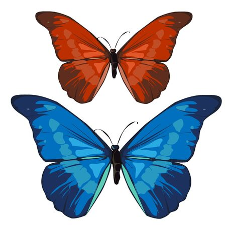 hindwing: Red and blue beautiful butterfly, vector insect on white background